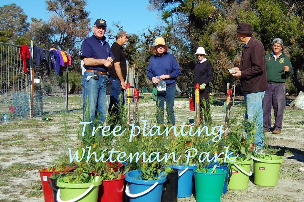 tree planting Whiteman park